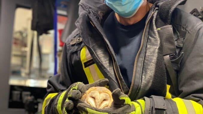 FW-DO: Feuerwehr befreit Schleiereule aus Stacheldraht