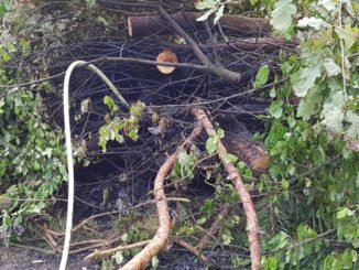 FW-ROW: Illegales verbrennen von Grünabfall auf privatem Grundstück