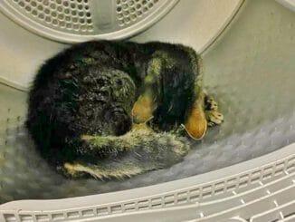 FW Grevenbroich: Feuerwehr holt Katze aus Wäschetrockner / Aggressiver Stubentiger drang unbefugt in fremden Keller ein - Tier gerettet und an Tierarzt übergeben