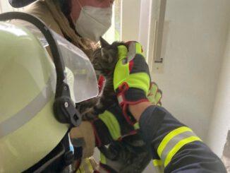 FW-LK Leer: Katze aus stillgelegten Schornstein gerettet