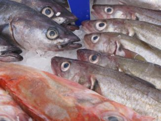 Fish Herring Smoked Animal Fresh  - PublicDomainPictures / Pixabay